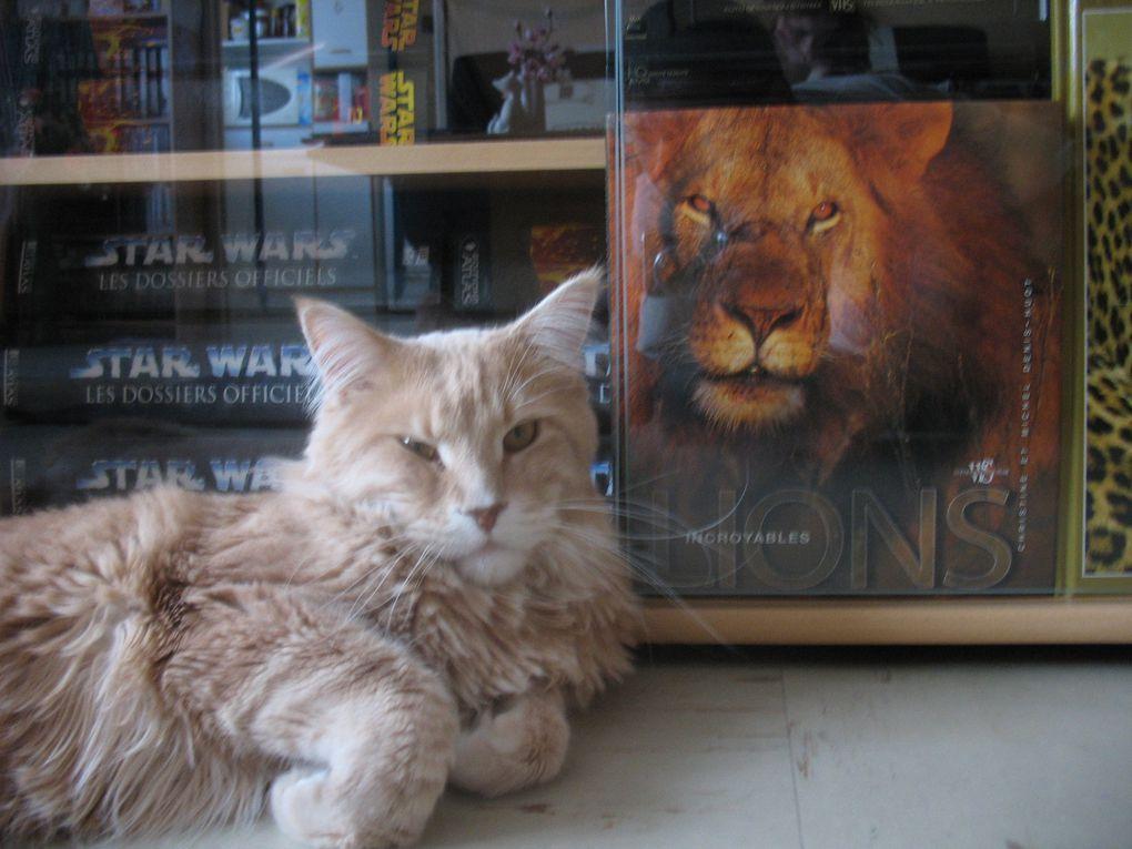 Bibi, un chat narcissique, mais adorable... Ses premières photos dans notre appartement.