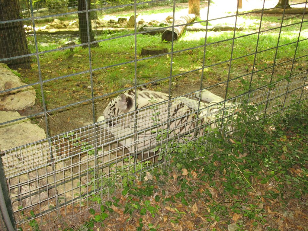 Le Zoo de Beauval et la plaine asiatique vu lors d'une visite en août 2011.