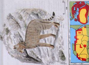Plein de photos de nombreuses photos d'espèces de félins.