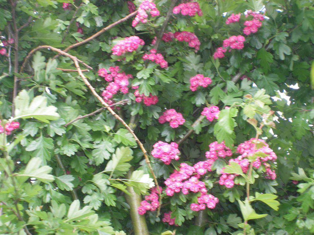 fleurs de jardin d'ici et d'ailleurs