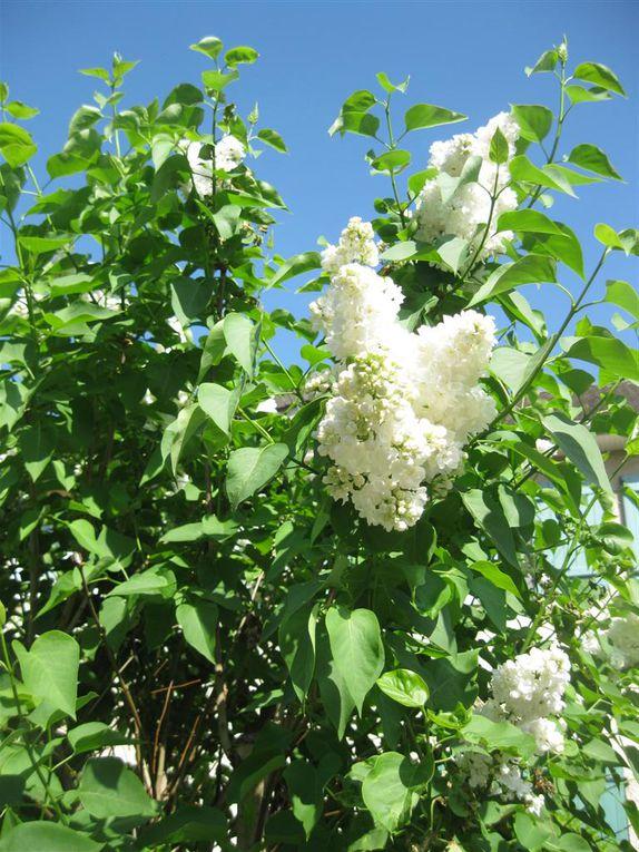 Images de fleurs que j'ai aimées