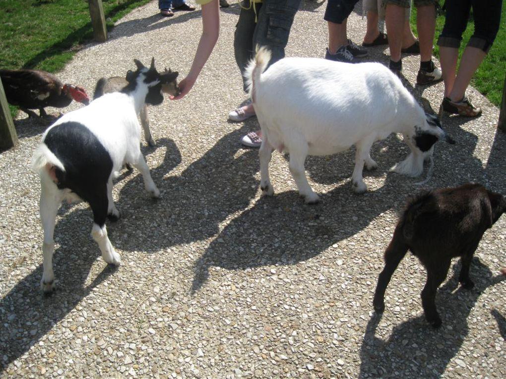 Visites au Zoo Parc de Beauval Loir et Cher