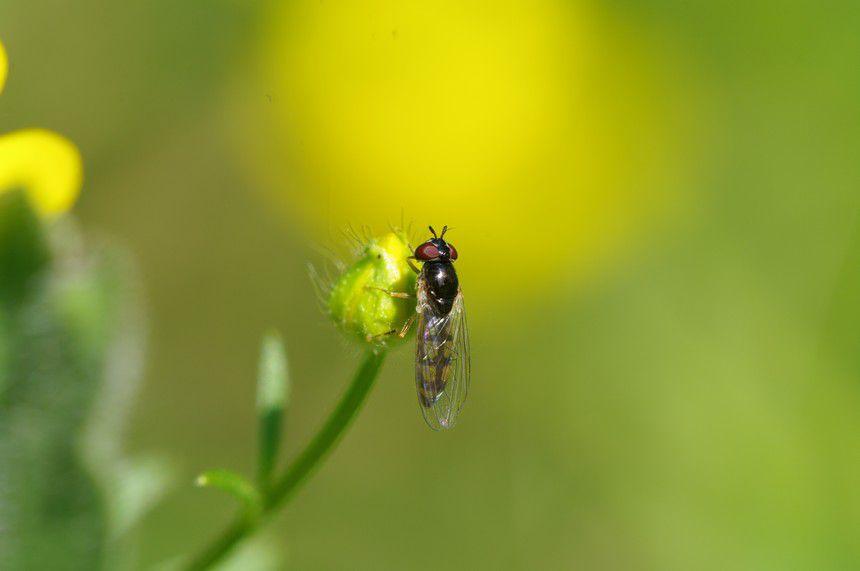 Album - Divers-insectes-2