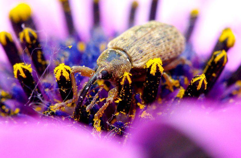 Des insectes sans nom