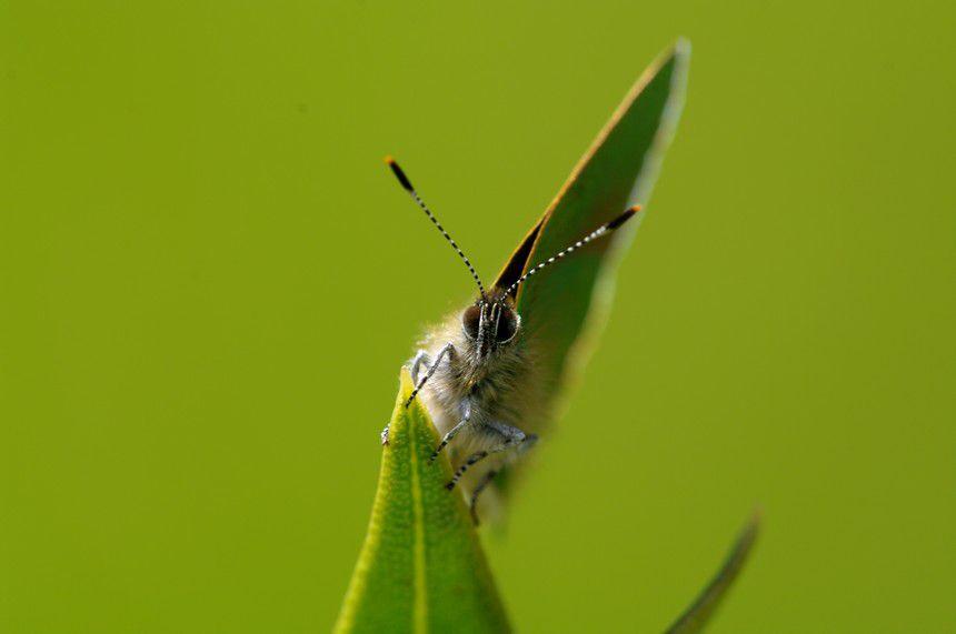 Album - Macro-Papillon-2