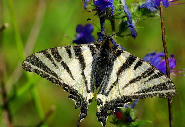 Album - Macro-Papillons