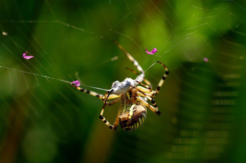 Album - Macro-araignée