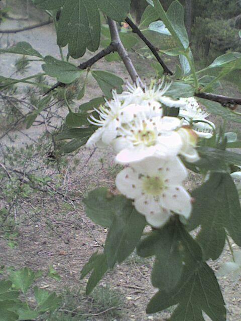 des fleurs de printemps dans les Alpes du Sud