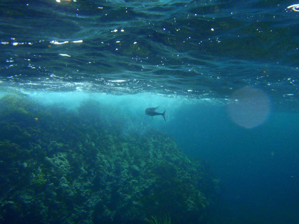 Images des fonds sous marin - Côte Caraibe - Commune des Anses d'Arlet