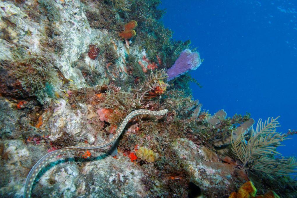 Photos de plongée sous marine en Martinique - Photos transmises par nos plongeurs - Nous attendons les vôtres - abyssplongee@hotmail.fr