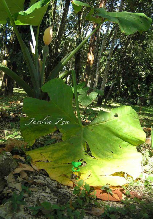 Album - blog-2011-JANVIER