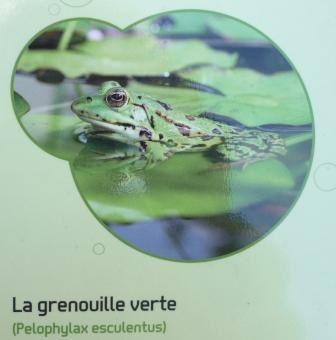 Album - Jardins-aquatiques-St-Didier-s.Ch.