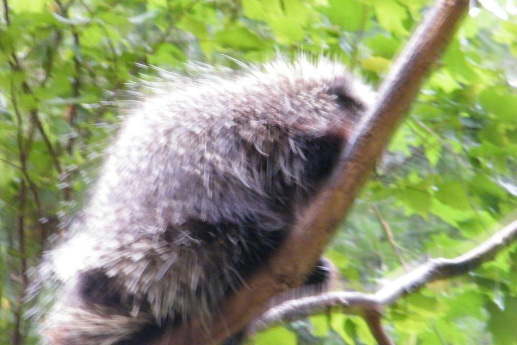 Journée pluvieuse passée au Biodôme de Montréal.Nous y avons passé un moment fabuleux au milieu des animaux évoluant dans 4 éco-systèmes sous un même toit.