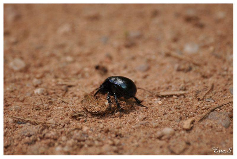 Album - Animaux - Insectes