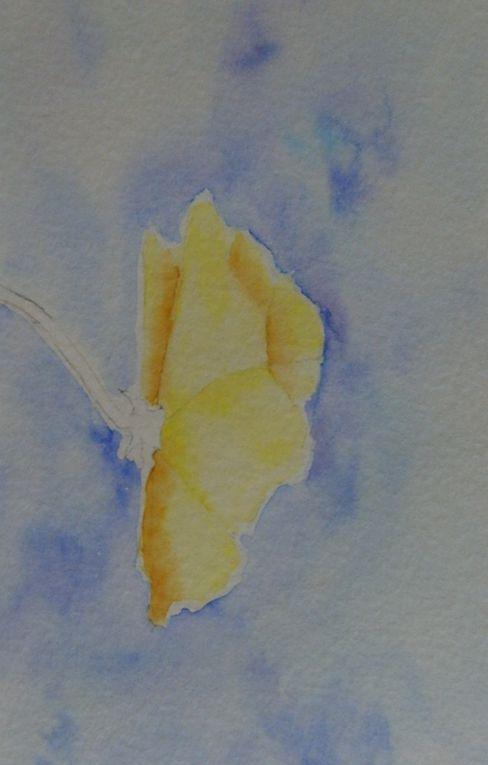 quelques unes de mes tentatives à l' aquarelle et au dessin.