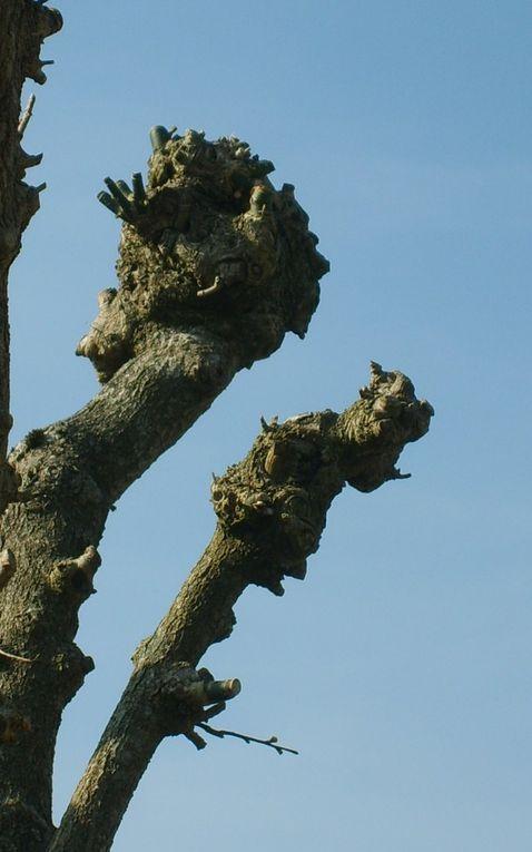 Album - arbres-et-souches