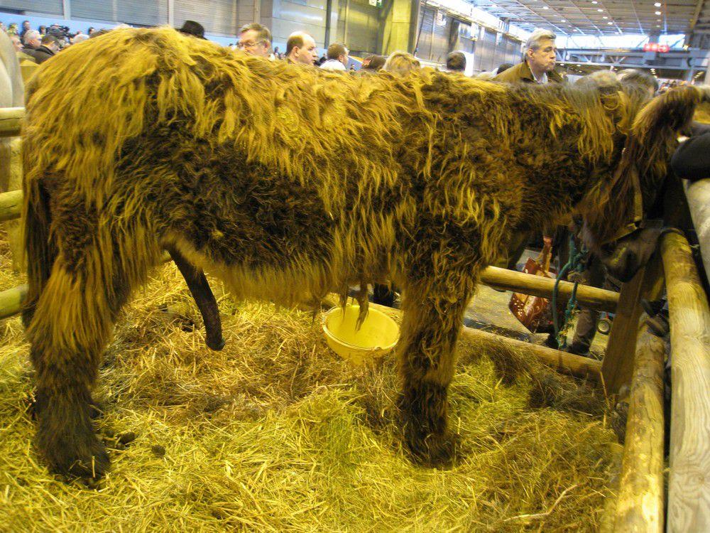Animaux présentés au salon de l'Agriculture 2010