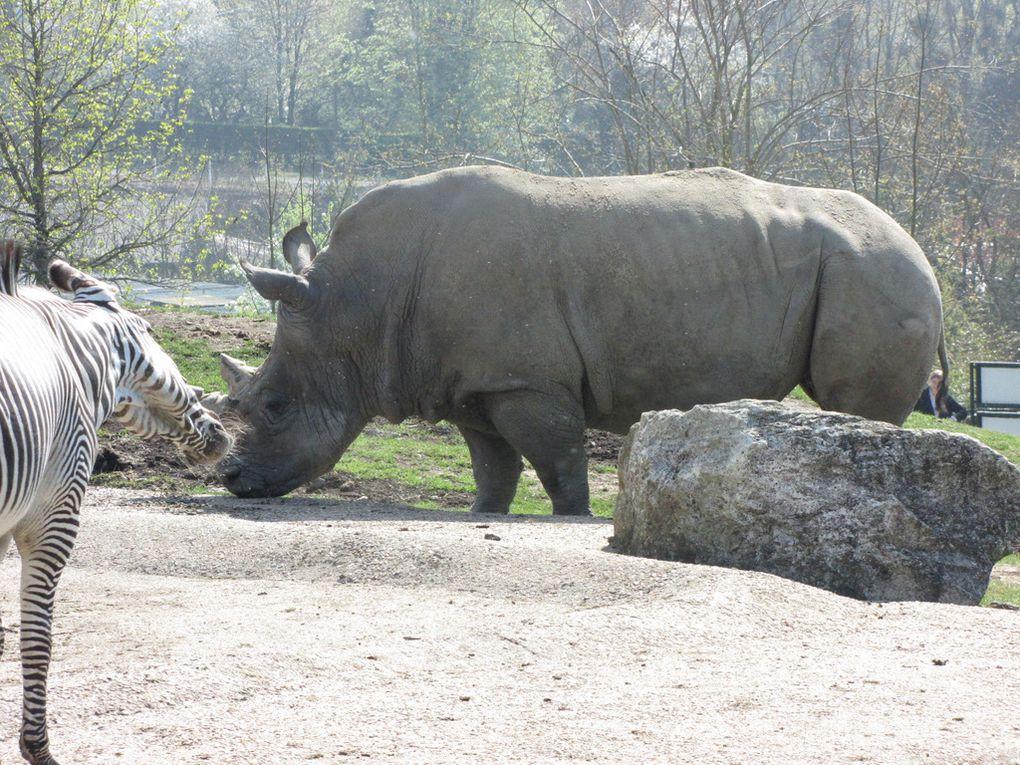 Balade au Zoo de Beauval, Saint-Aignan, Loir-et-Cher