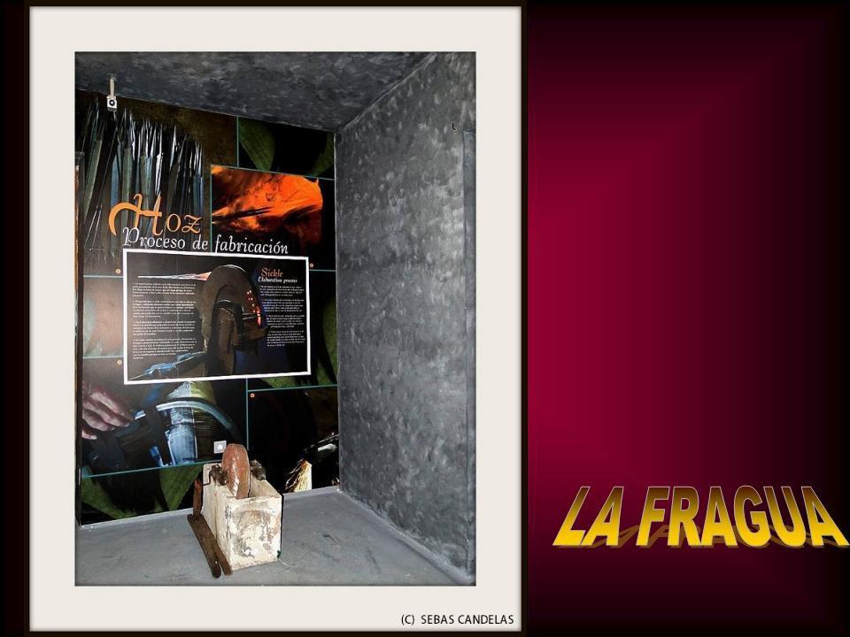 Album - MUSEO-LA-ROSA-DEL-AZAFRAN