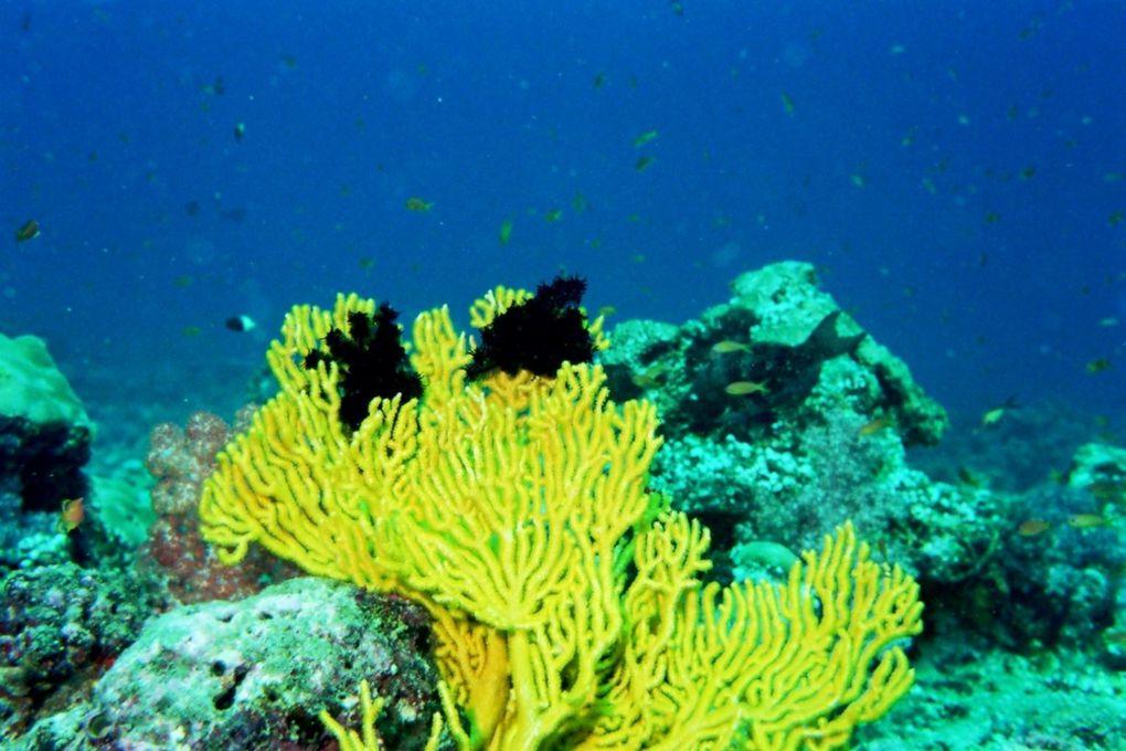 Album - Maldives