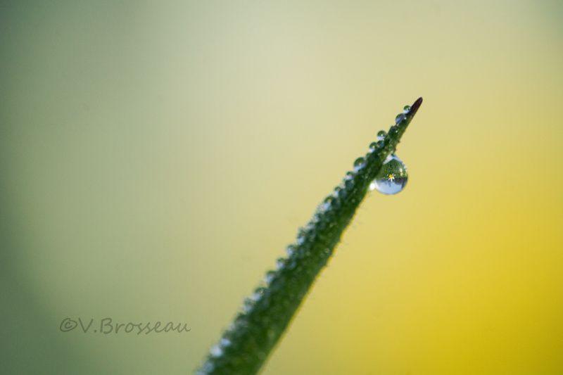 gouttes en macrophotogouttes sur fleurs