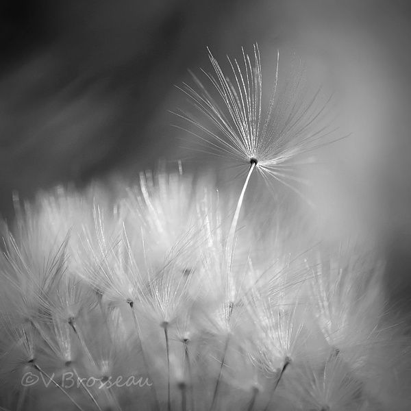 Album - flore-macro