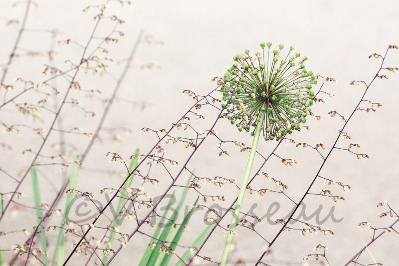 Album - flore2