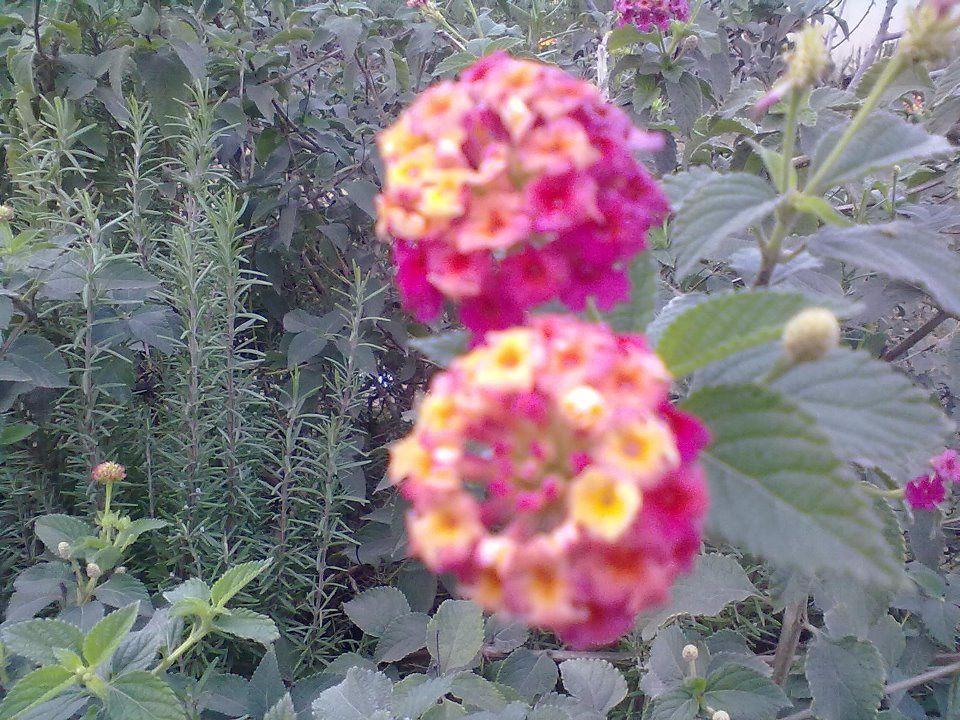 Plantes et fleurs de nos montagnes.