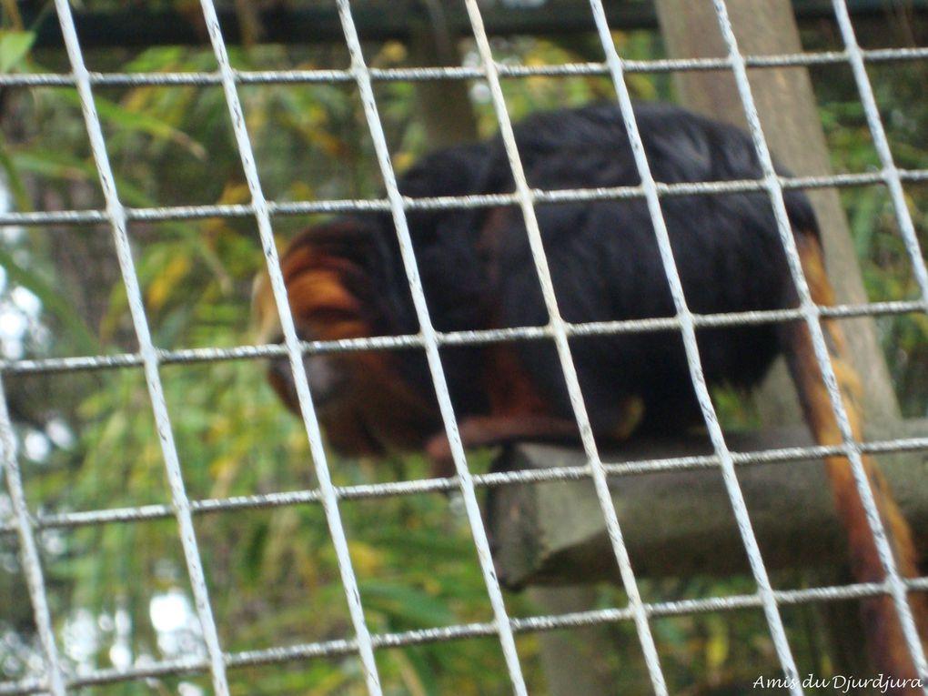 Plus de 100 photos d'animaux sauvages prises en captivité.