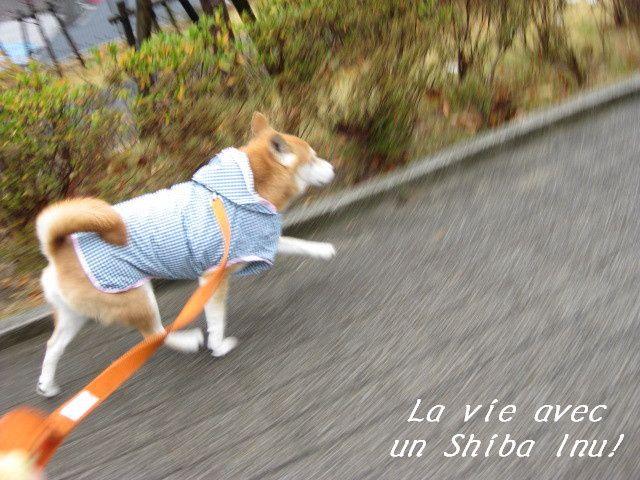 Album - Mon-Shiba3