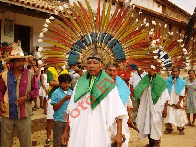 todo lo relacionado a la naturalezaamaznia boliviana