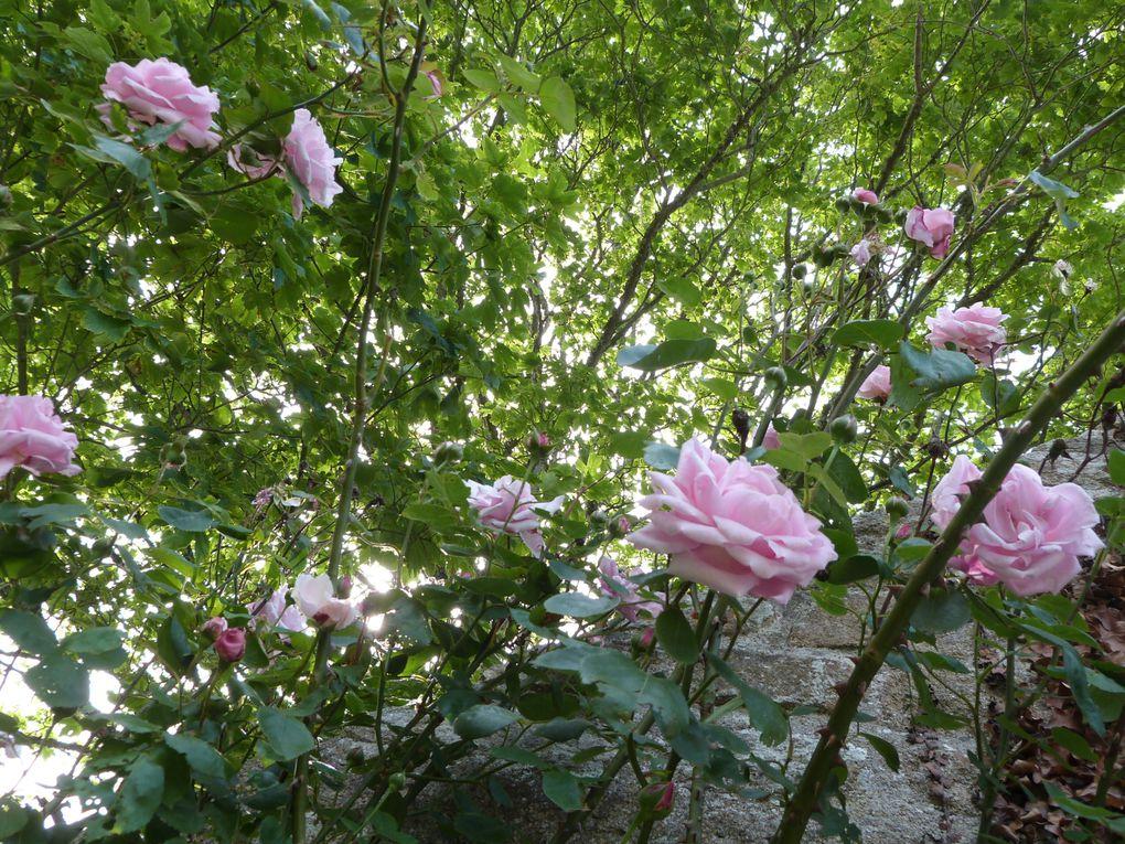 Album - Dans le jardin