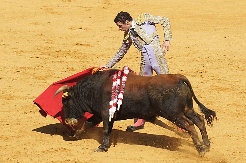 Album - 2012 / 09 - Toros-y-salsa-novillada-du-Lartet.