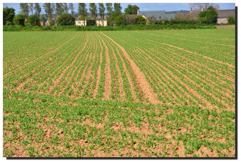 Album - Agriculture-4
