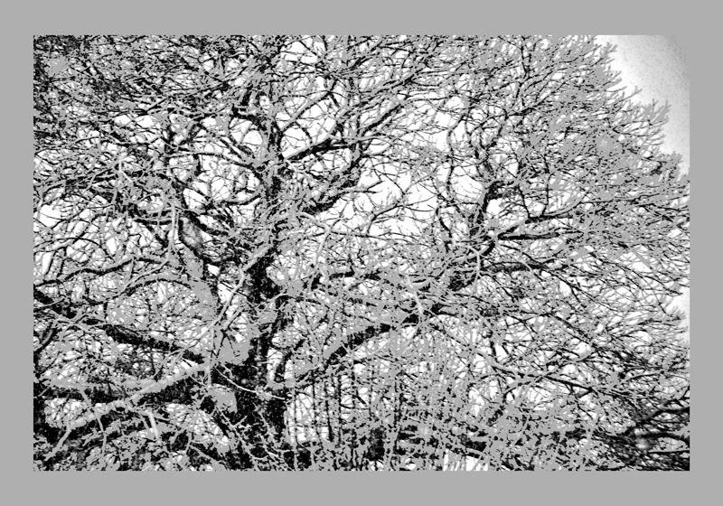 Des arbres remarquables avec ou sans le label