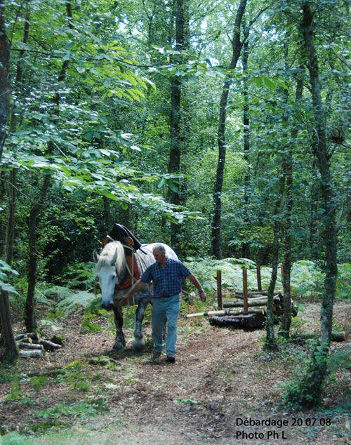 Des travaux agricoles pour lesquels kle cheval constituait la force de traction.