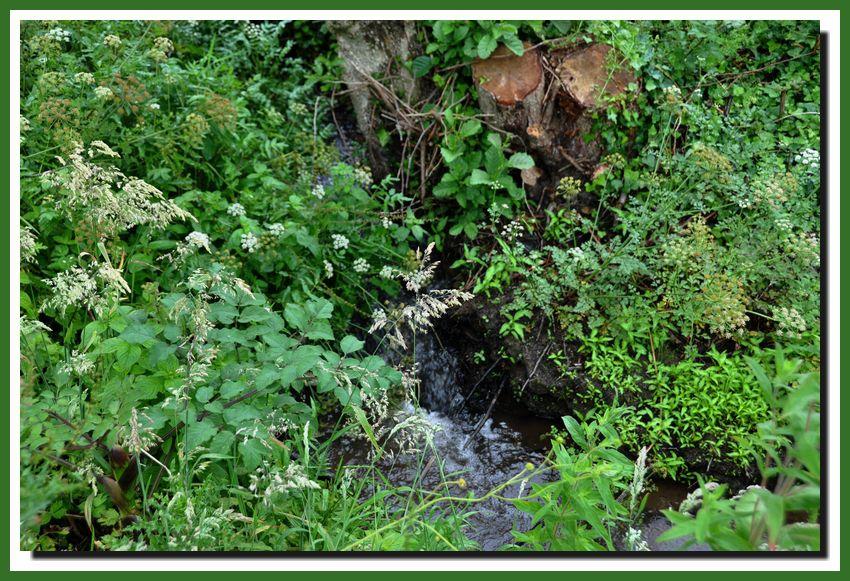 La Sinope, fleuve qui se jette dans la mer à Quinéville.