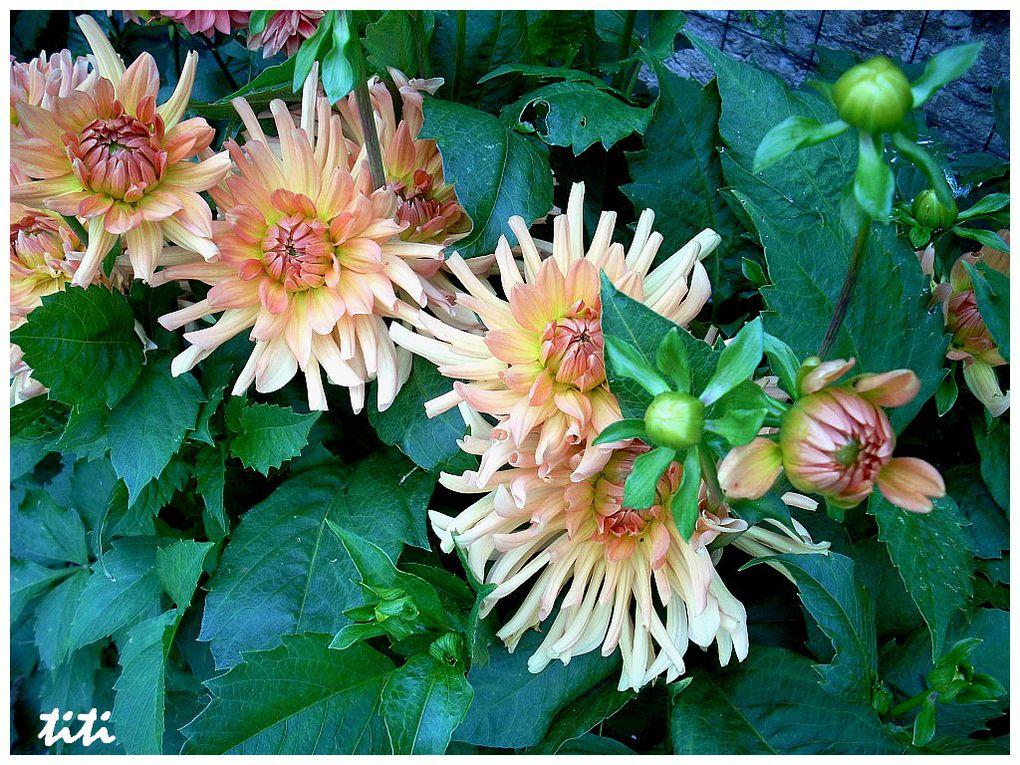 Fleurs de jardin, fleurs et plantes sauvages