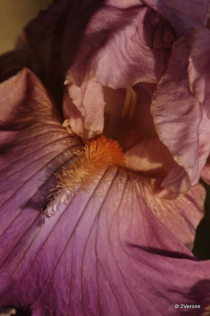 Album - Macro ' Fleurs