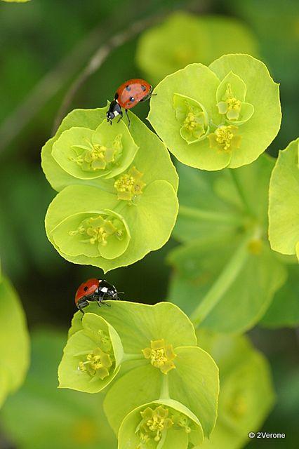 Album - Macro ' Insectes