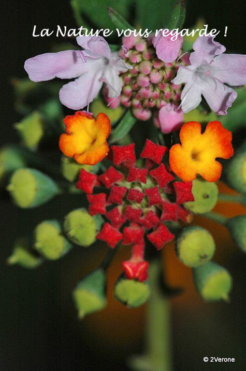Album - La Nature  &quot&#x3B; vous &quot&#x3B; regarde ...