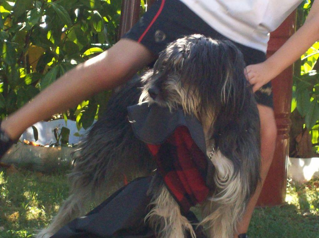 Mon chien. Il a 3 ans et c'est un vrai nounours.