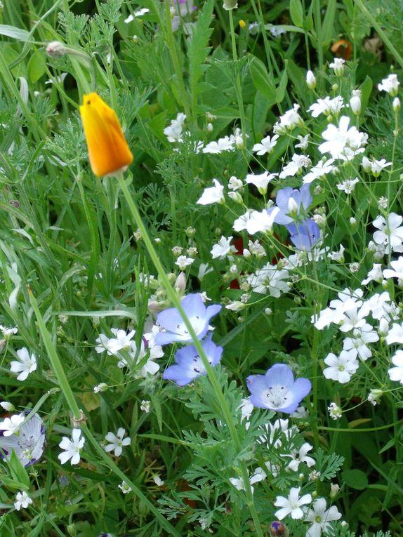 fleurs des villes et fleurs des champs