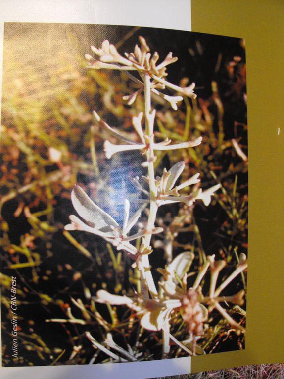 Album - jardin-botanique-de-Brest