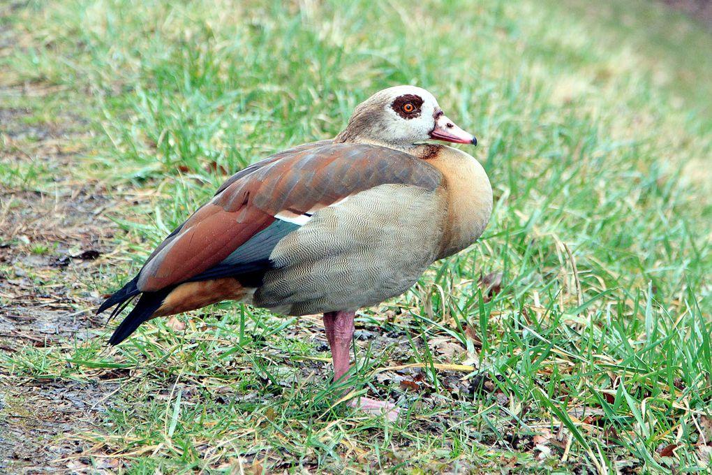 Album - Mes-oiseaux