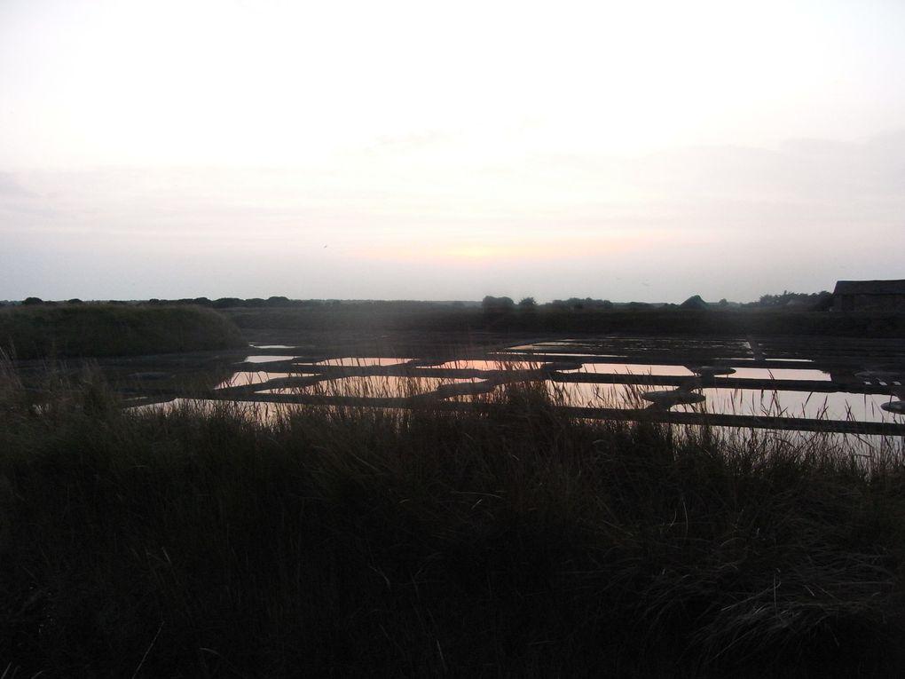 Album - Jeux de lumière dans les marais