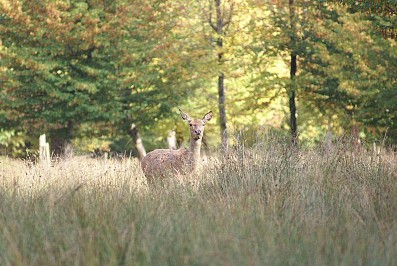 diaporama d'images d'animaux réalisées dans la nature ou en parcs animaliers