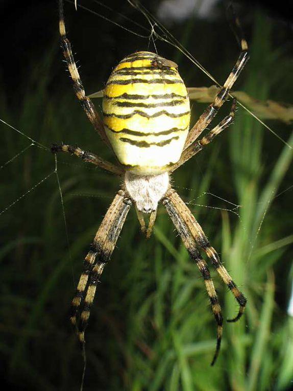contient des macros-photos d'insectes
