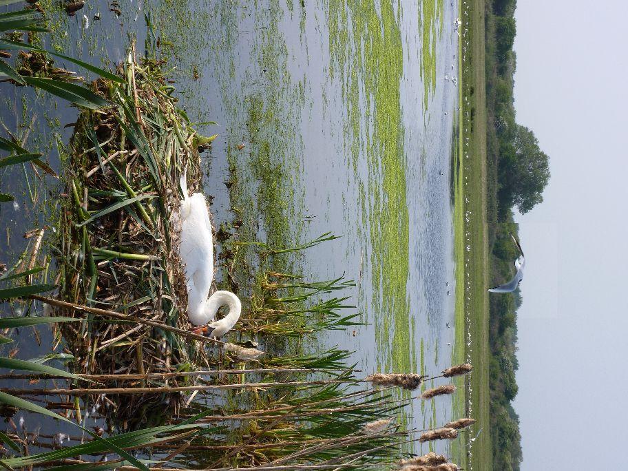 Un petit voyage en baie de Somme, royaume des oiseaux.