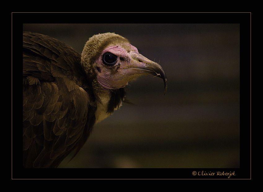 Quelques photos de rapaces & oiseaux plus communs.